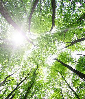 Asesoramiento de empresas sobre asuntos medioambientales